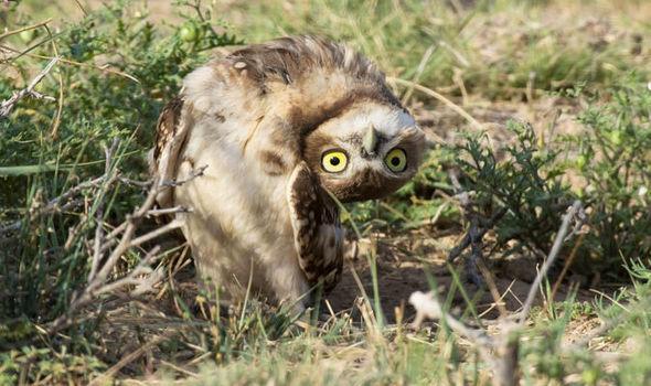 owl-706139.jpg